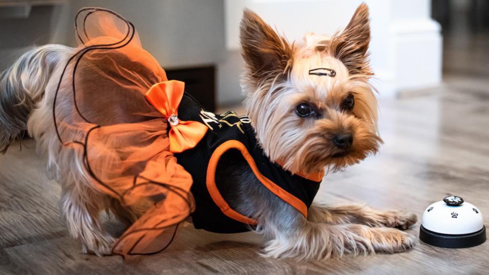 DogPro.ro cover image