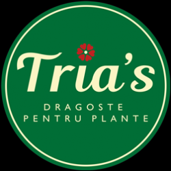 Floraria Tria`s Piata Gemeni logo