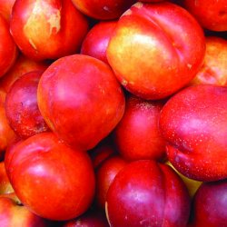 Nectarine BIO 100g MP