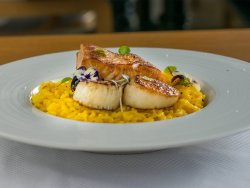 Saffron risotto with pan seared salmon and scallops  image