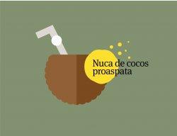 Nucă de cocos proaspătă    image