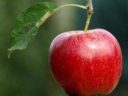 Măr image