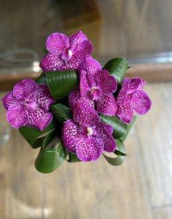 Buchet de orhidee Vanda