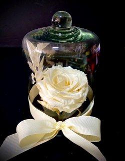 Trandafiri Criogenați