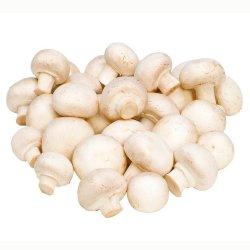 Ciuperci Champignon image