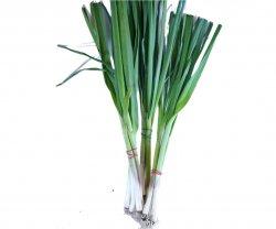 Usturoi Verde image