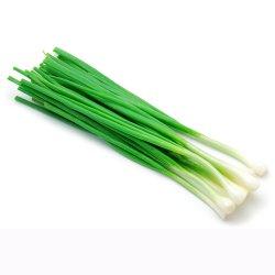 Ceapă verde