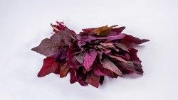 Lobodă roșie image